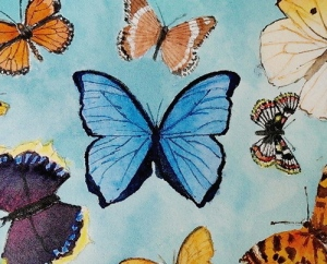 butterflies a