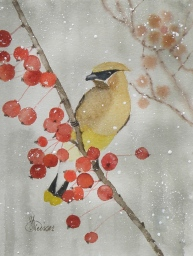 cedar waxwing miniature 5x7 april 2016