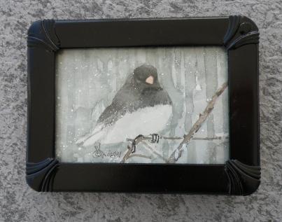 dark-eyed junco may 2016