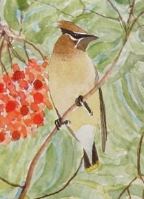 cedar waxwing for pendant a